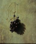 Grapes by Thomas Kegler