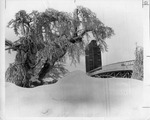 Snow covered trees and bridge by The Buffalo Courier-Express Newspaper