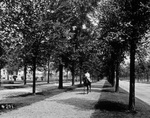 Lincoln Parkway with its canopy of American elms. Anonymous photograph, c.1945.
