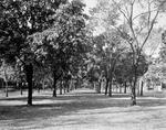 Humboldt Parkway. Anonymous photograph, c. 1910.