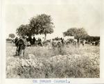 Israel; Haifa; 1926; Elijah Day on Mount Carmel; Photograph