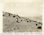 Palestine; Jericho; 1926; Shephard With Flock; Photograph by Harry W. Rockwell