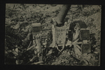 Captured Artillery by WWI Postcards from the Richard J. Whittington Collection