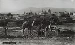 Cana of Galilee, Palestine